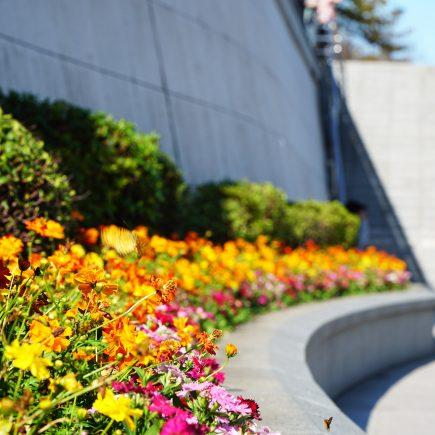 Flowers at Sumida Park, Asakusa, Tokyo