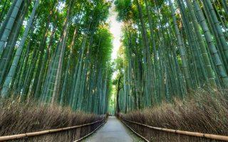Arashiyama Bamboo Forrest. Credit: Alexander De Leon Battista. Licensed under CC. Original modified.