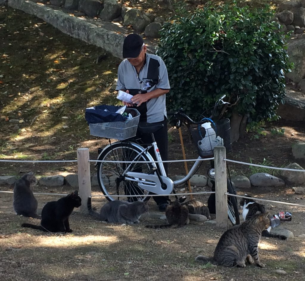 Guy feeds cats at Himeji Castle