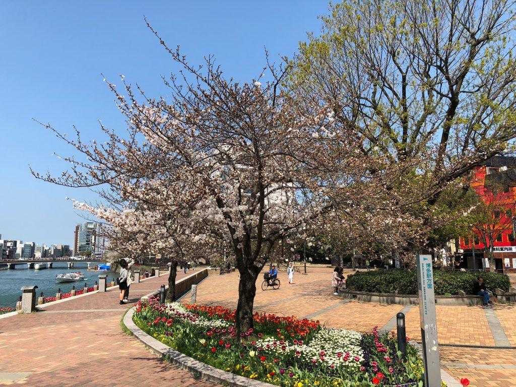 Seiryu Park in Nakasu, Fukuoka