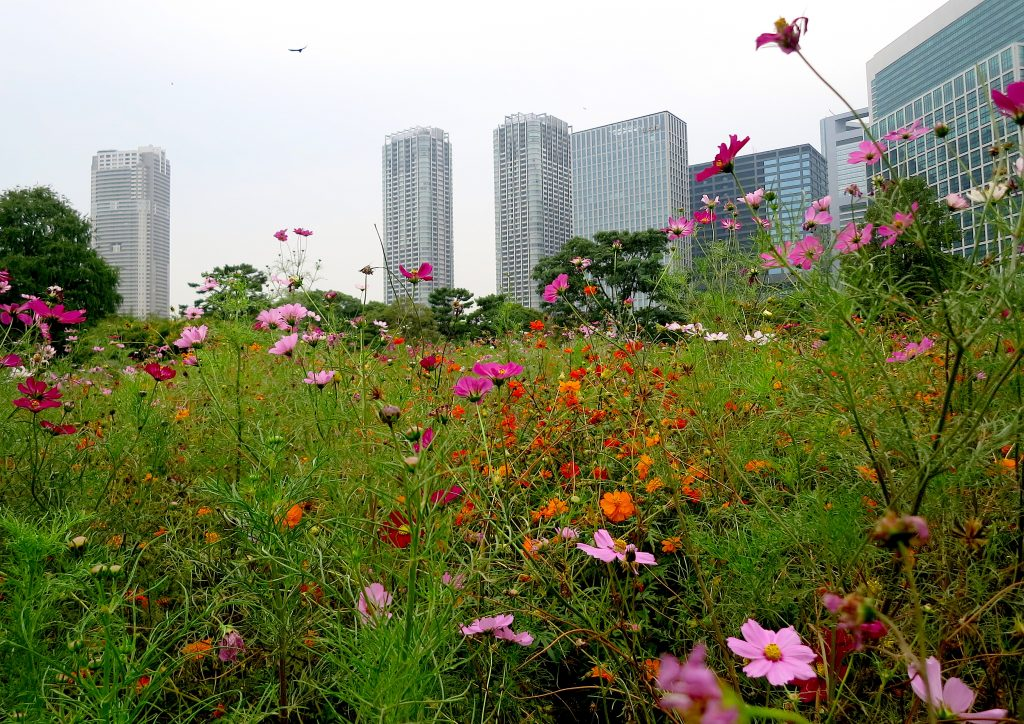Flower Field and Hamarikyu Gardens