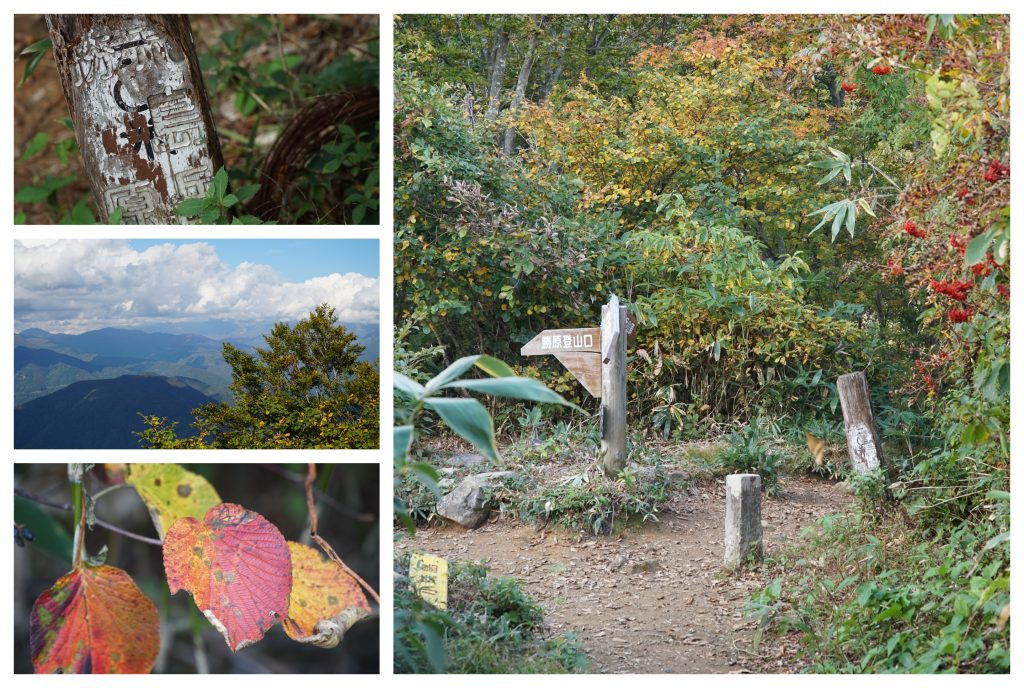 Arashima rhododendron plateau