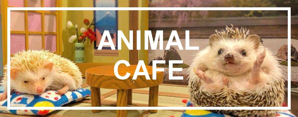 Animal Cafe. Credit: klook.com