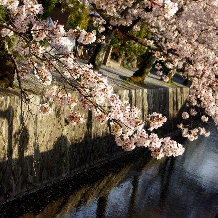 Philosophers Walk, Kyoto. Credit: Lucas Mascaro. Licensed under CC.