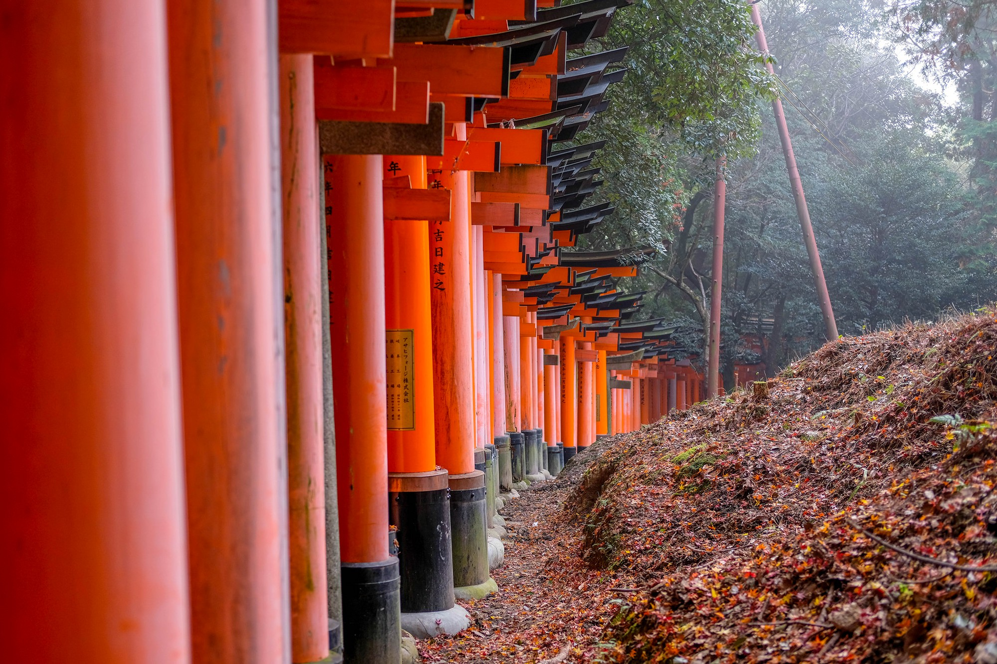 Torii Gates at Fushimi Inari Shrine. Credit: sergejf. Licensed under CC 2.0.