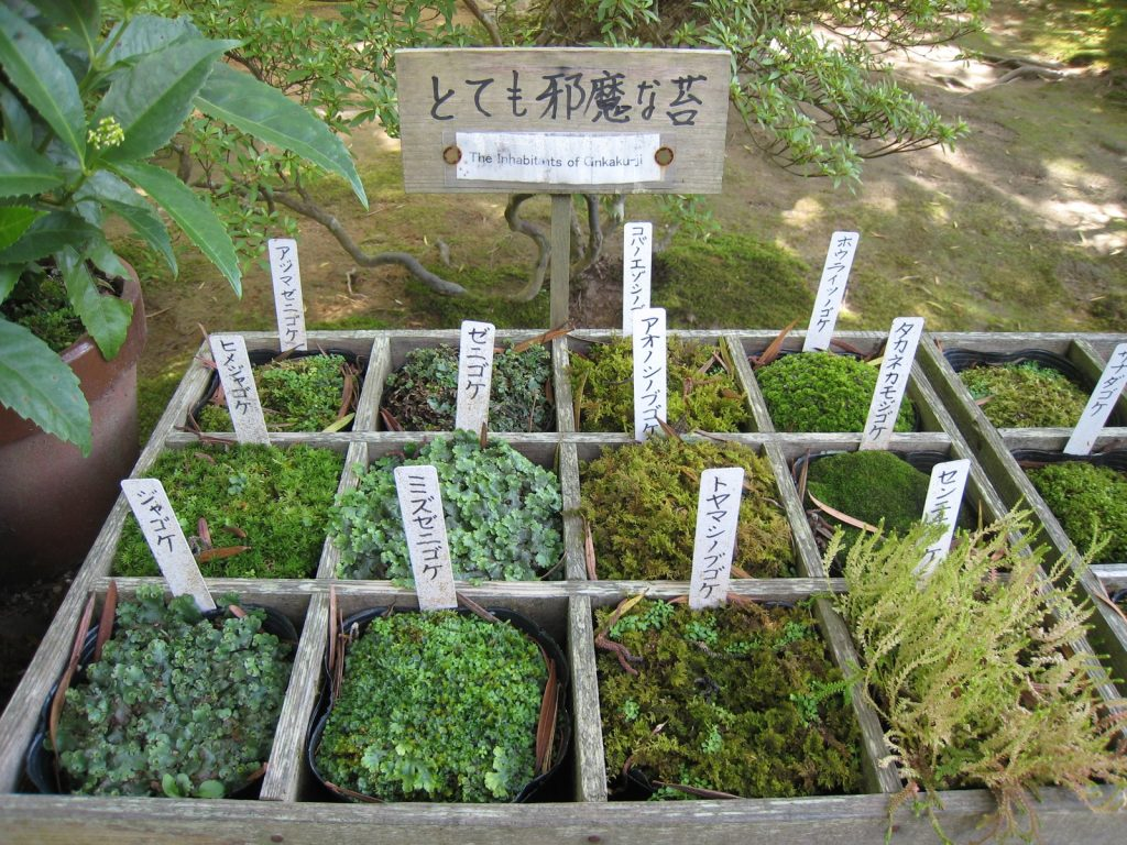Display of moss types found in the temple garden. Credit: Connie. Licensed under CC.