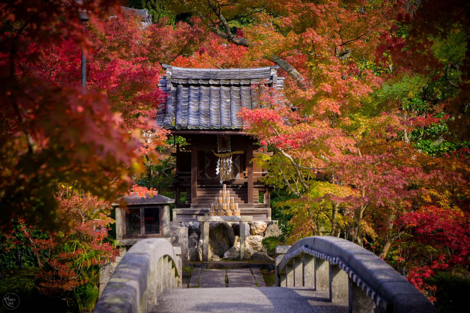 Fall leaves at Eikando Temple. Credit: aurea-avis. Licensed under CC BY-ND 2.0.