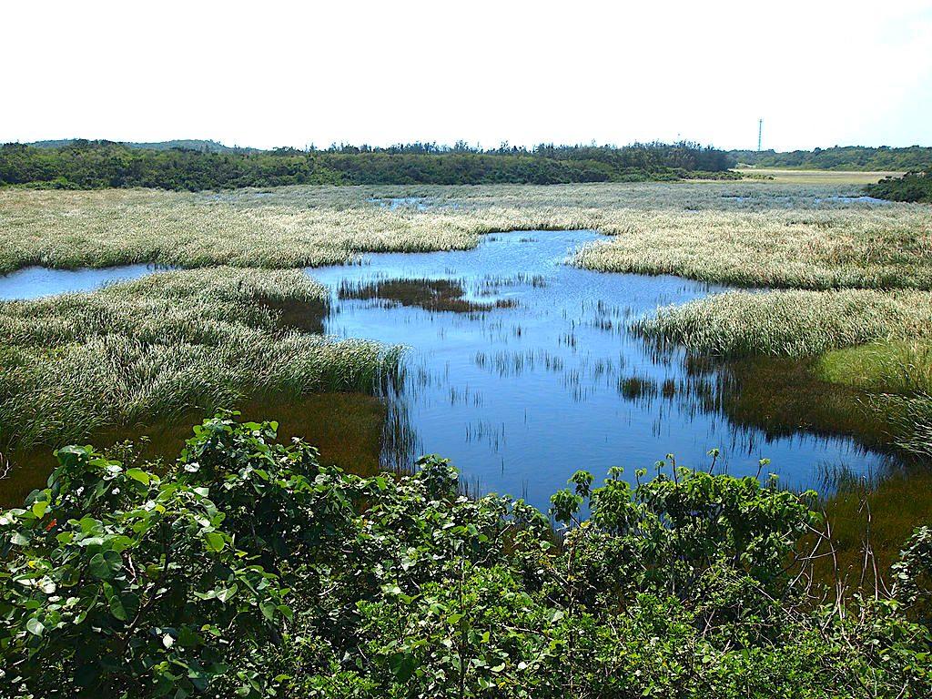 Ikema Wetland, Miyakojima. Credit: Paipateroma. Licensed under CC BY-SA 3.0.