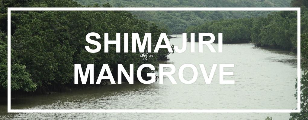 Shimajiri Mangrove. © touristinjapan.com