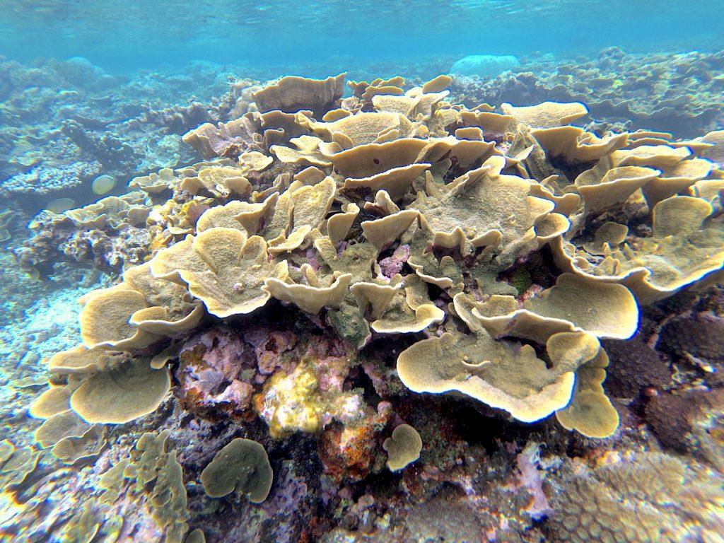 Corals and Miyakojima. Photo © touristinjapan.com.