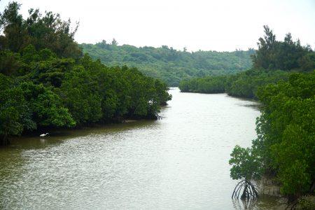 Shimajiri Mangrove Forest. © touristinjapan.com