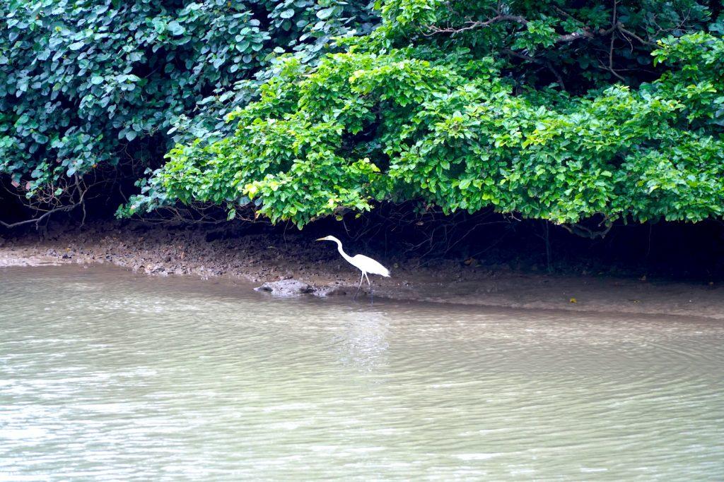 Shimajiri Mangrove Forest, heron. © touristinjapan.com
