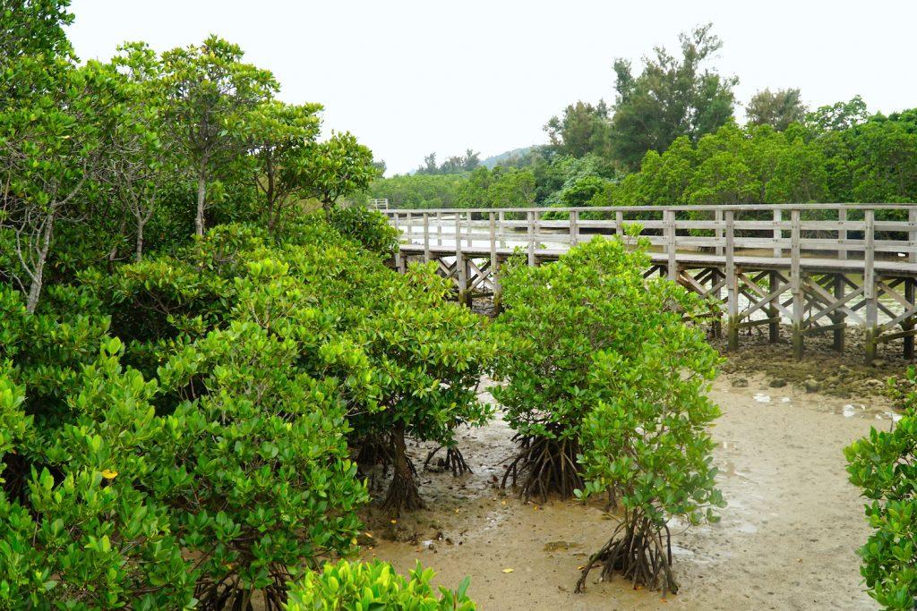 Shimajiri Mangrove Forest path. © touristinjapan.com