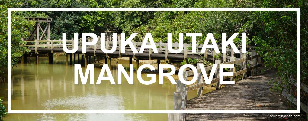 Upuka Utaki Mangrove, Miyakojima. © touristinjapan.com