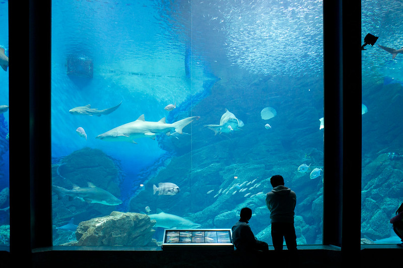 Umi no Nakamichi Marine World. Photo by Takashi Yamaoku. CC BY-SA 2.0.