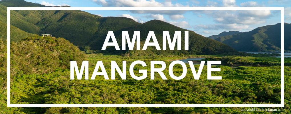 Amami Mangrove © touristinjapan.com