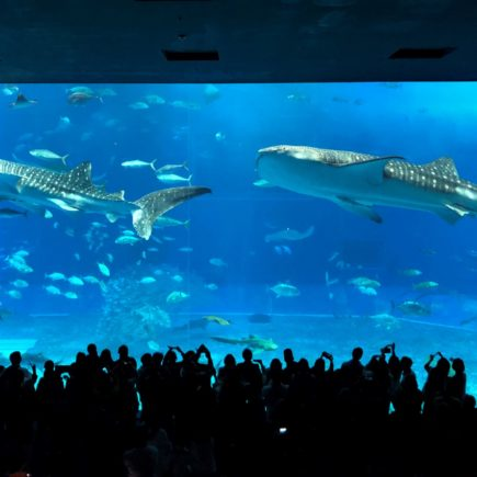 Okinawa Churaumi Aquarium. © touristinjapan.com