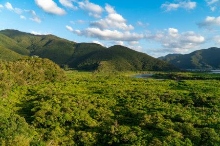 Amami Mangrove Primeval Forest. © touristinjapan.com