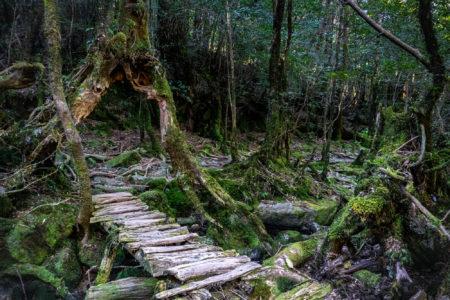 Shiratani Unsuikyo Ravine, Yakushima Island. © touristinjapan.com