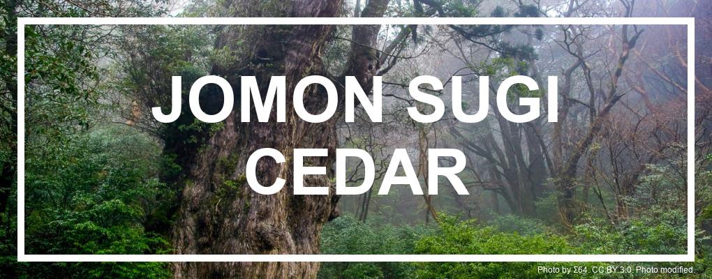Jomon Sugi Cedar tree, Yakushima, Itinerary. Photo by Σ64. CC BY 3.0. Photo modified.
