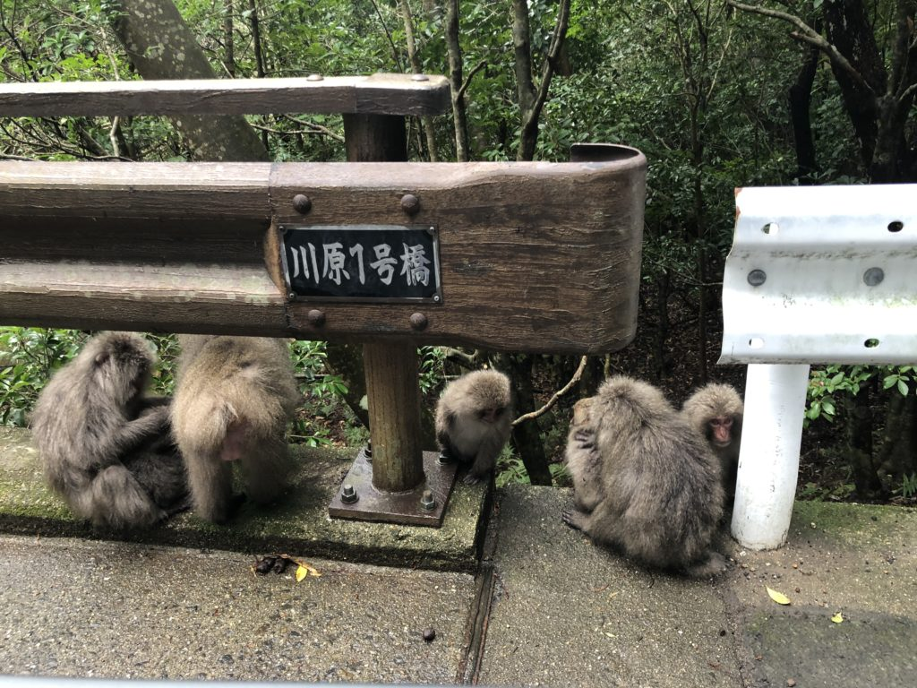 Monkeys on Yakushima. © touristinjapan.com