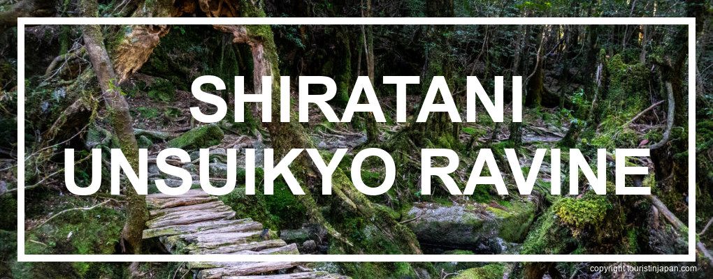 Yakushima Shiratani Unsuikyo Ravine Itinerary. © touristinjapan.com