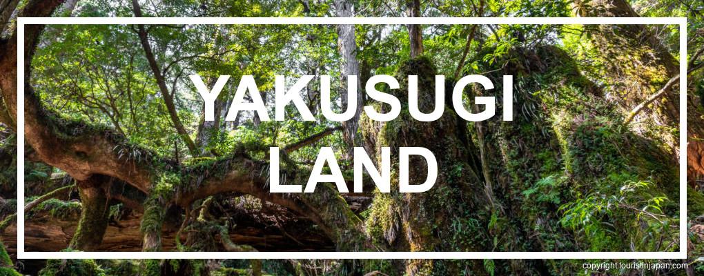 Yakushima Yakusugi Land Itinerary. © touristinjapan.com