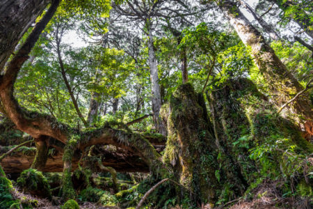 Yakusugi Land, Yakushima Island. © touristinjapan.com